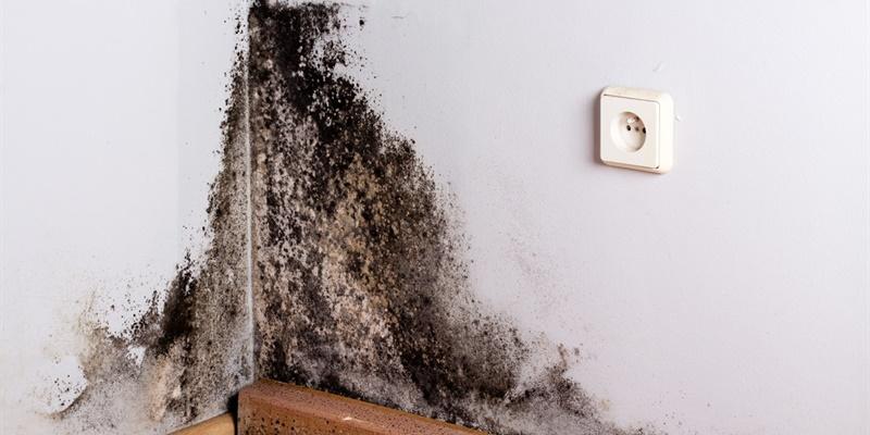 Hoe zwarte schimmel op muren verwijderen?