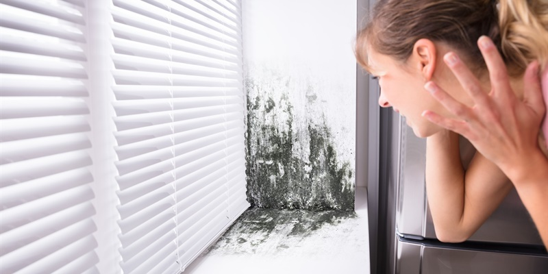 schimmel in de slaapkamer oorzaken hoe aanpakken